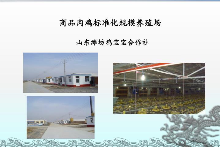 商品肉鸡标准化规模养殖场