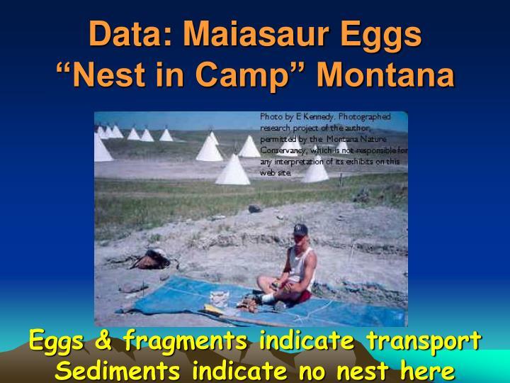 Data: Maiasaur Eggs