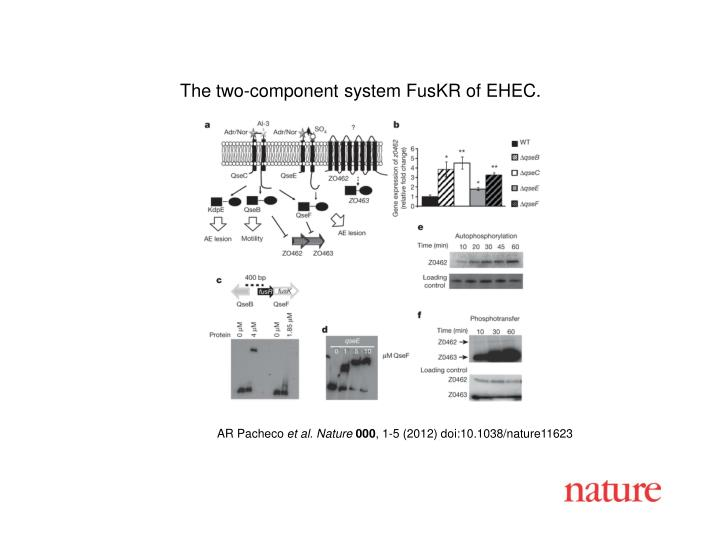 The two-component system FusKR of EHEC.