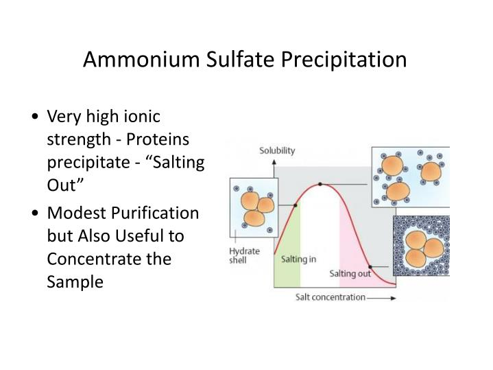 Ammonium Sulfate Precipitation