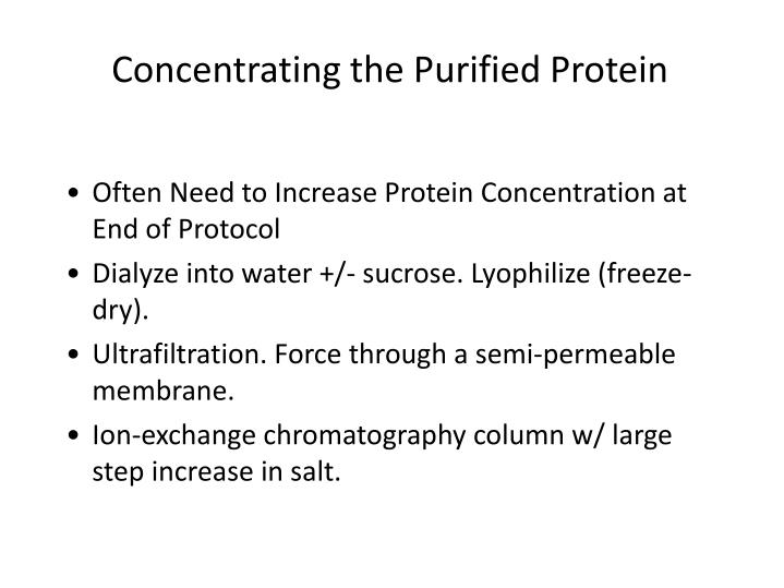 Concentrating the Purified Protein