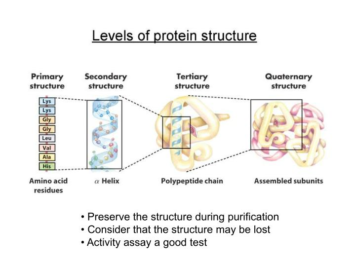 • Preserve the structure during purification