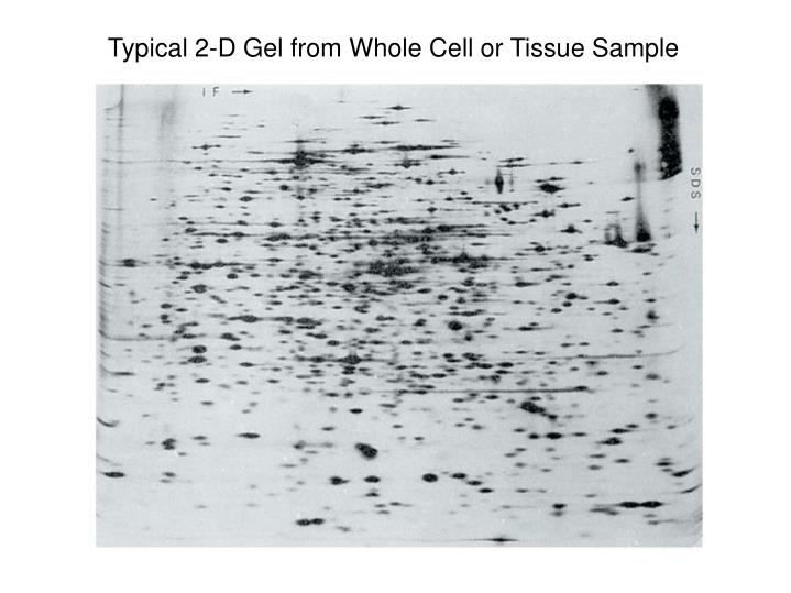 Typical 2-D Gel from Whole Cell or Tissue Sample