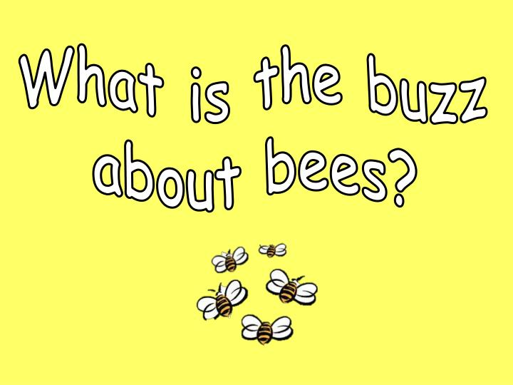 what is the buzz about bees