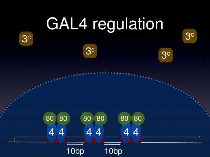 GAL4 regulation