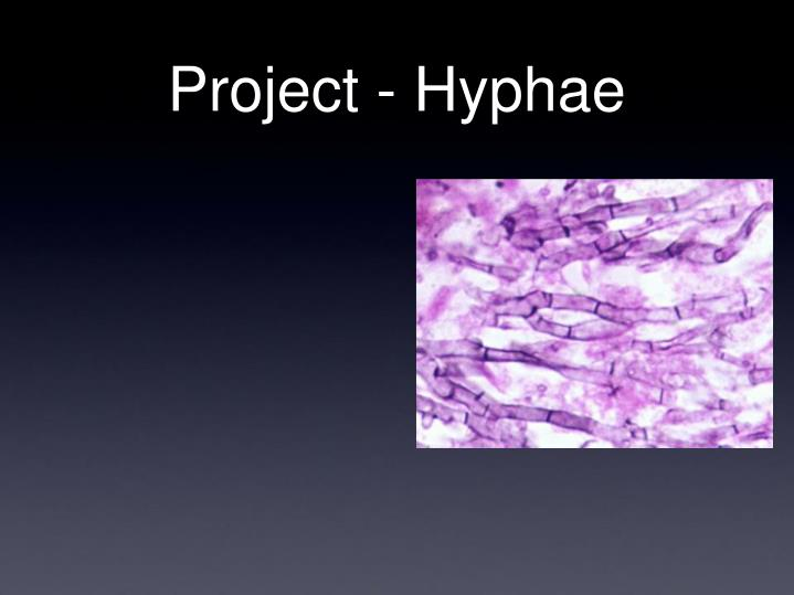 Project hyphae
