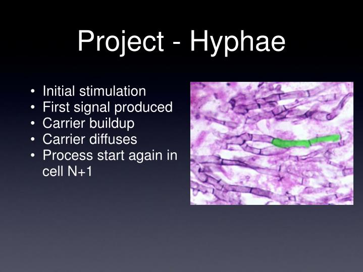 Project - Hyphae