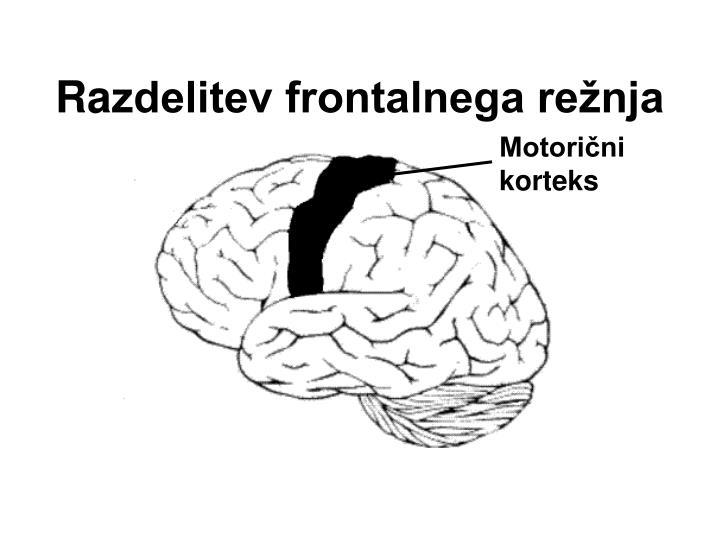 Motorični korteks
