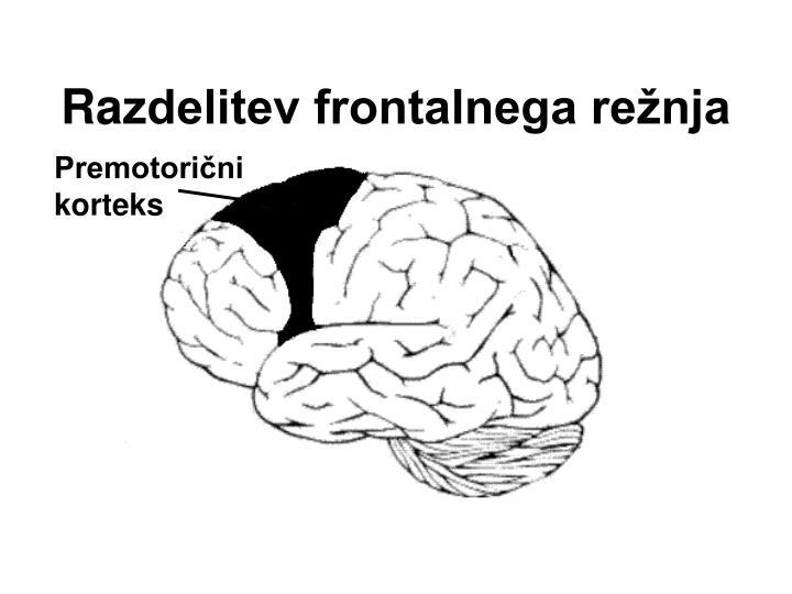 Premotorični korteks