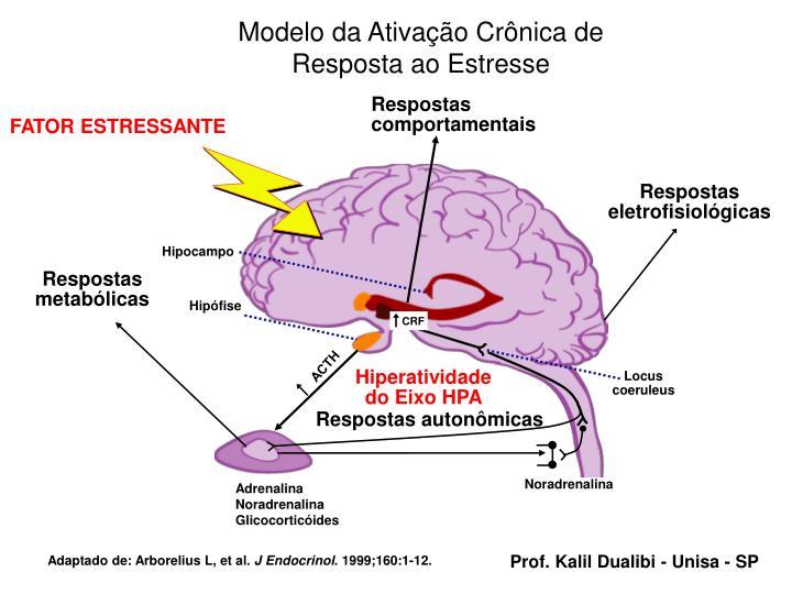 Modelo da Ativação Crônica de