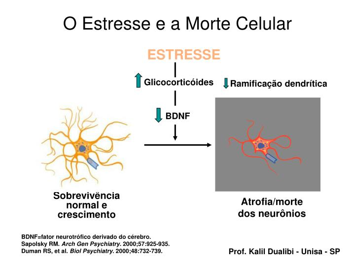 O Estresse e a Morte Celular