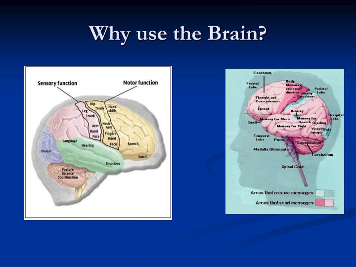 Why use the brain