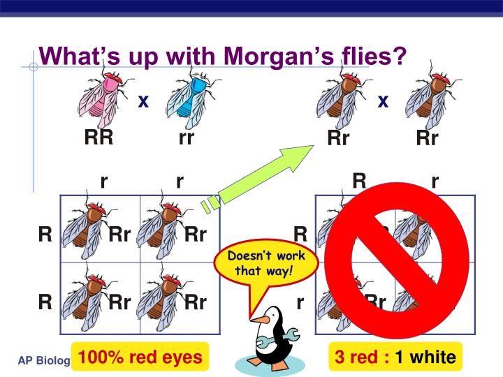What's up with Morgan's flies?