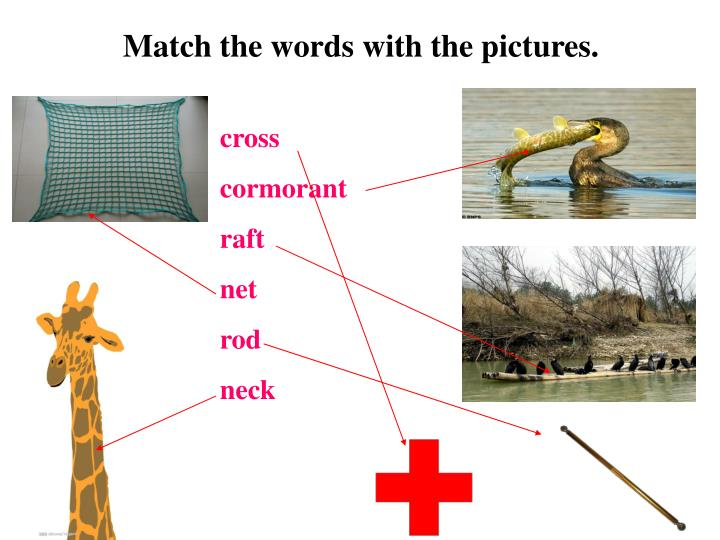 Match the words with the pictures.