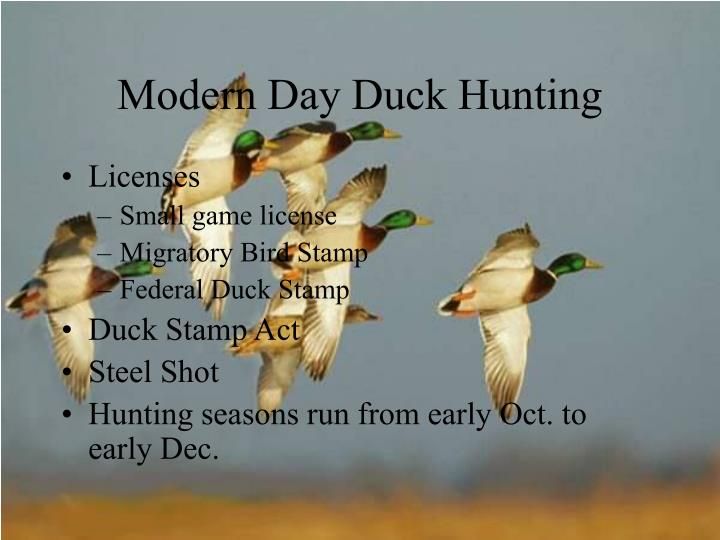 Modern Day Duck Hunting