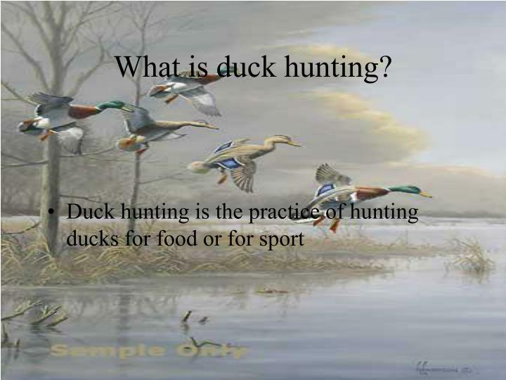 What is duck hunting?