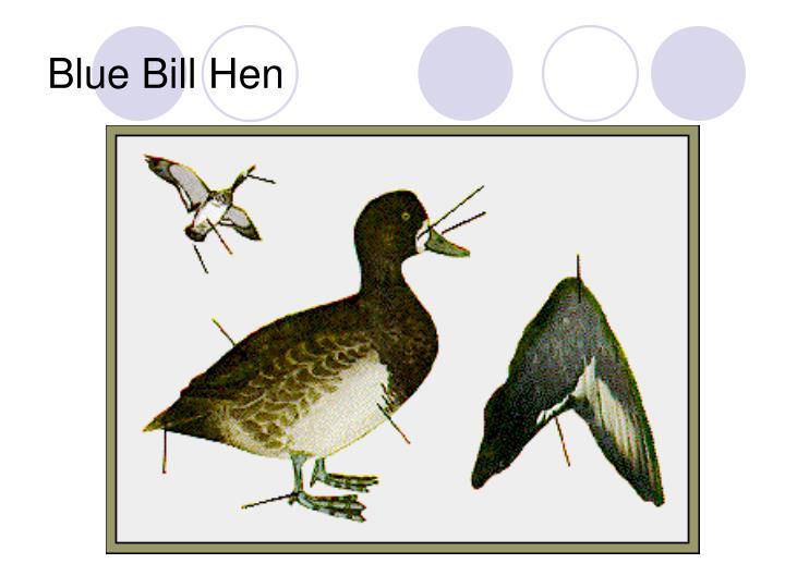 Blue Bill Hen