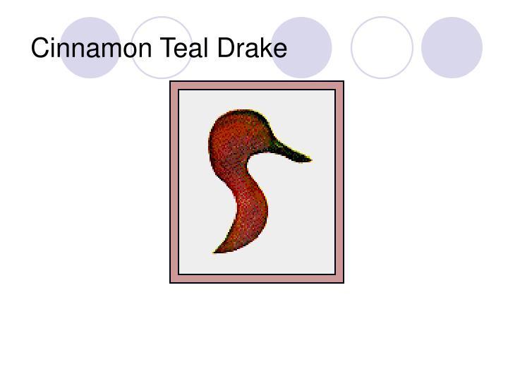 Cinnamon Teal Drake