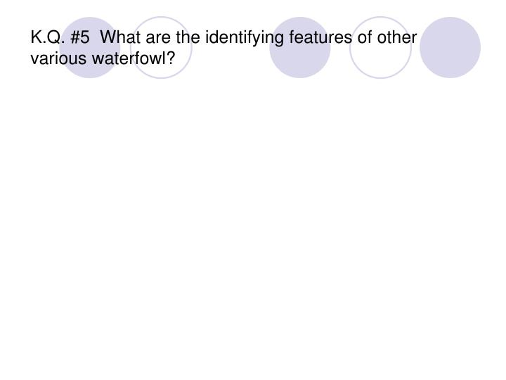 K.Q. #5  What are the identifying features of other various waterfowl?