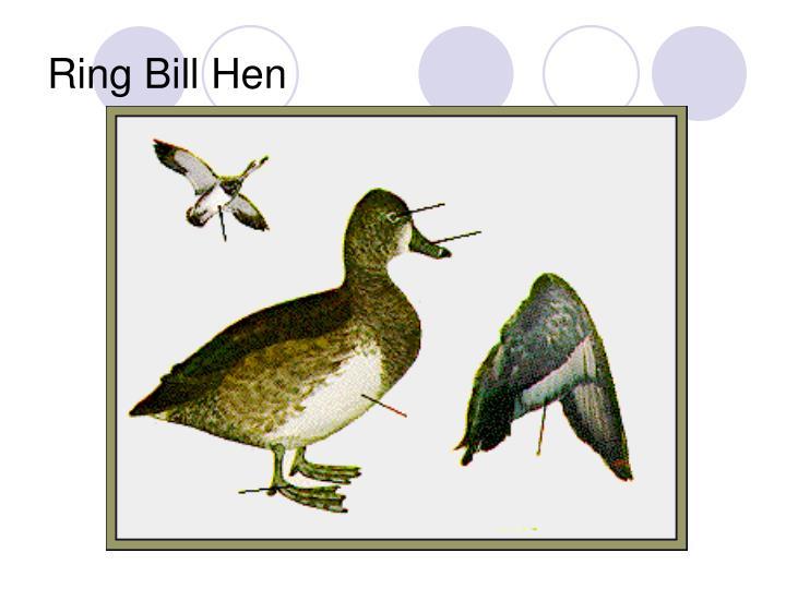 Ring Bill Hen