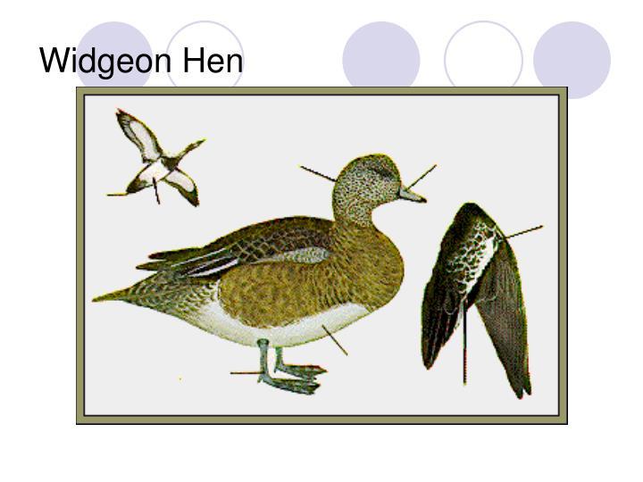 Widgeon Hen