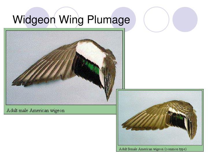 Widgeon Wing Plumage