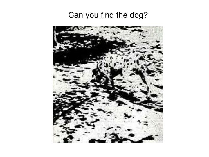 Can you find the dog?
