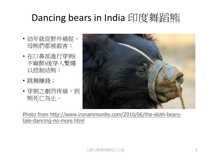 Dancing bears in india