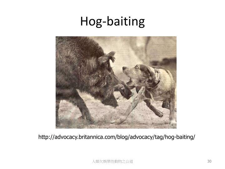 Hog-baiting