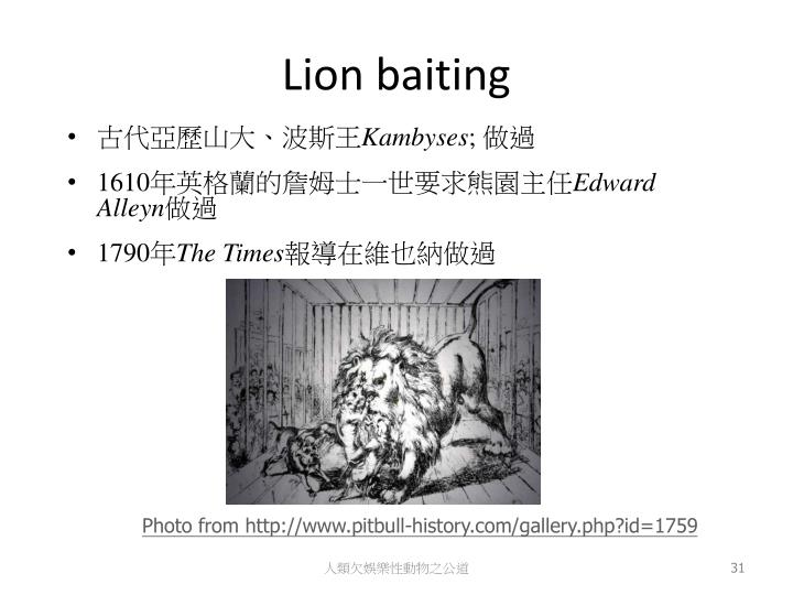 Lion baiting