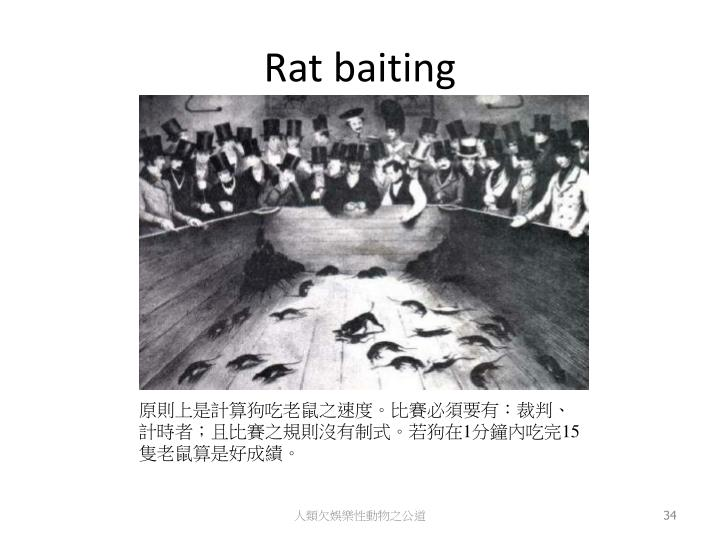 Rat baiting