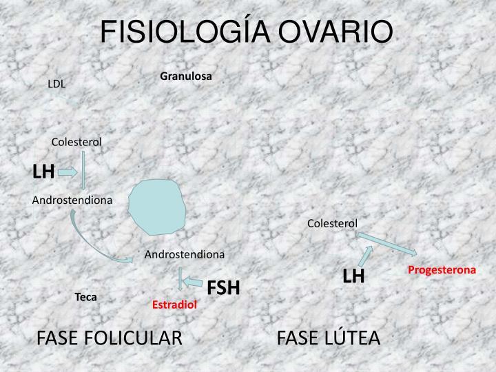 FISIOLOGÍA OVARIO