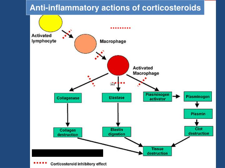 Anti-inflammatory actions of corticosteroids