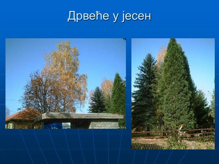 Дрвеће у јесен