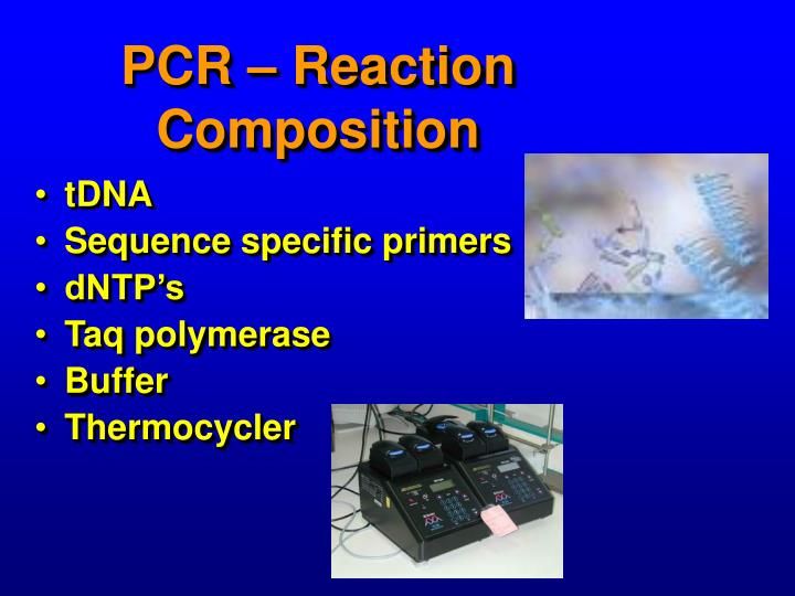 PCR – Reaction Composition