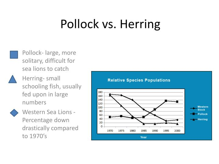 Pollock vs. Herring