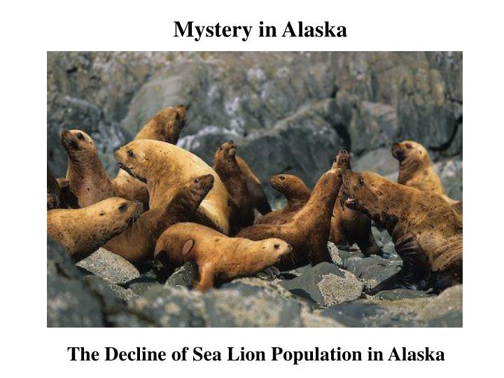 The Decline of Sea Lion Population in Alaska