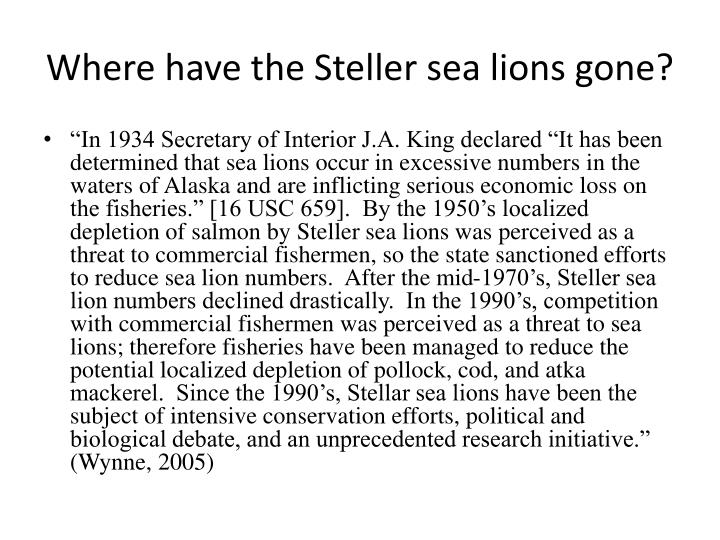 Where have the Steller sea lions gone?