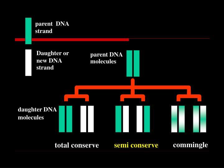 parent  DNA
