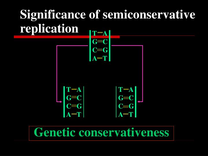 Significance of semiconservative