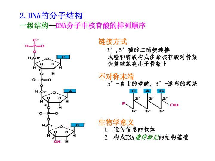 2.DNA