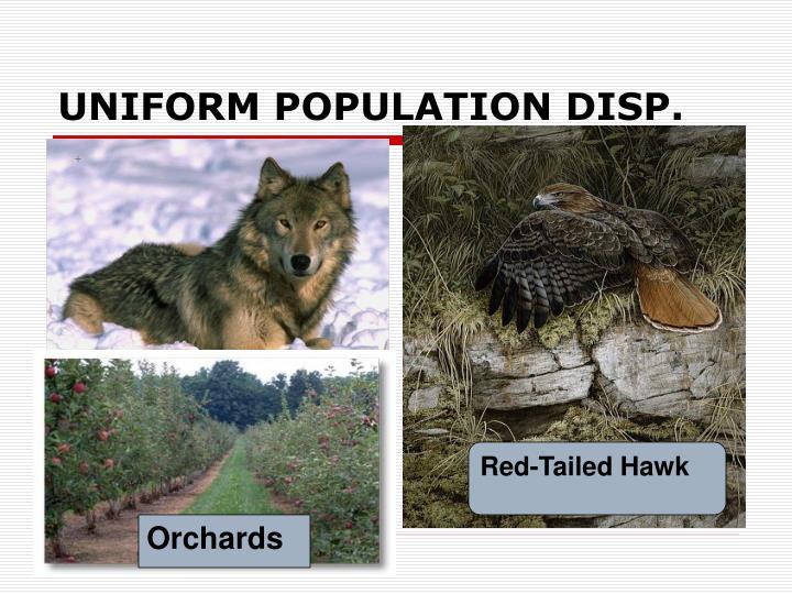 UNIFORM POPULATION DISP.