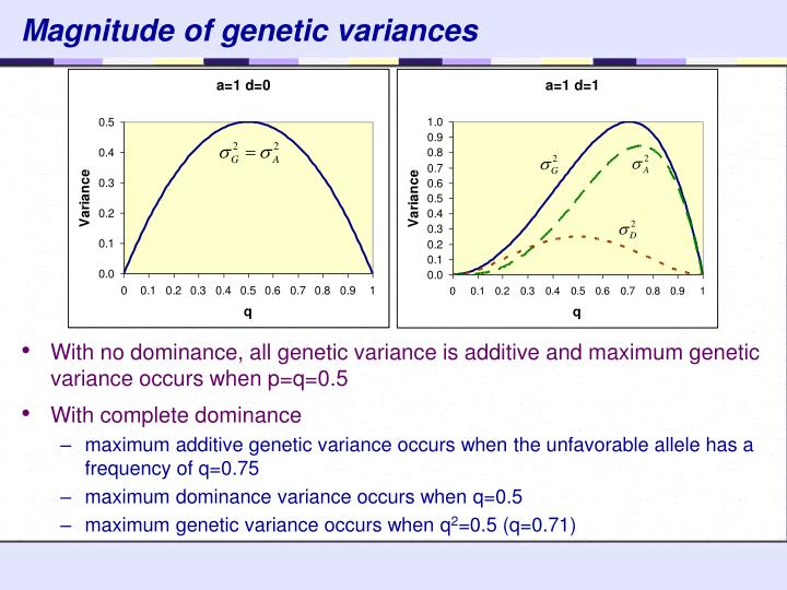 Magnitude of genetic variances