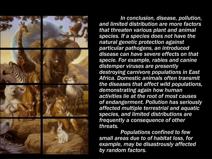 In conclusion, disease, pollution, and limited distribution are more factors that threaten various plant and animal species. If a species does not have the natural genetic protection against particular pathogens, an introduced disease can have severe effects on that specie. For example, rabies and canine distemper viruses are presently destroying carnivore populations in East Africa. Domestic animals often transmit the diseases that affect wild populations, demonstrating again how human activities lie at the root of most causes of endangerment. Pollution has seriously affected multiple terrestrial and aquatic species, and limited distributions are frequently a consequence of other threats.