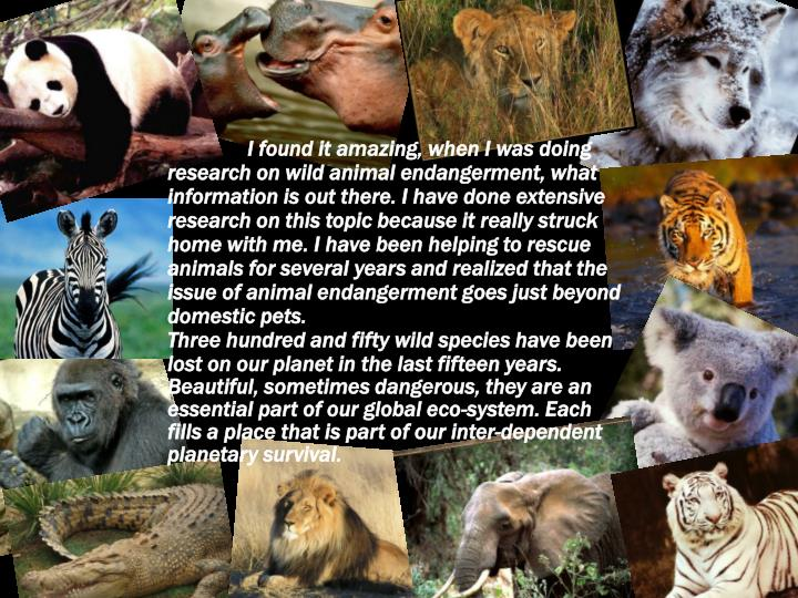 I found it amazing, when I was doing research on wild animal endangerment, what information is out there. I have done extensive research on this topic because it really struck home with me. I have been helping to rescue animals for several years and realized that the issue of animal endangerment goes just beyond domestic pets.
