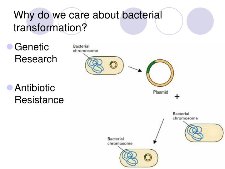 Why do we care about bacterial transformation?
