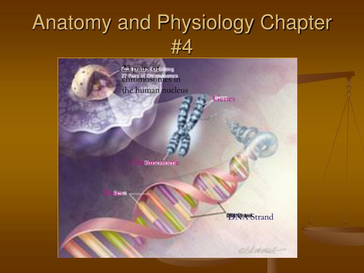 Psysiology chapter 4 Term paper Writing Service
