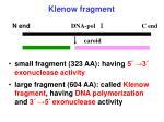 klenow fragment