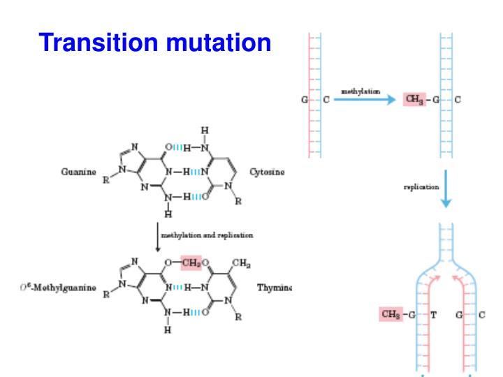 Transition mutation