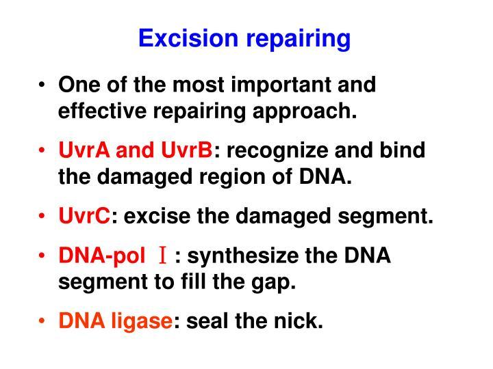 Excision repairing